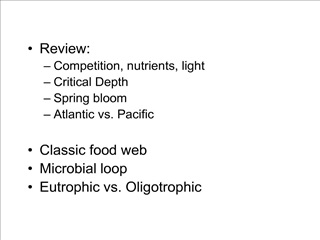 review: competition, nutrients, light critical depth spring bloom atlantic vs. pacific  classic food web microbial loop