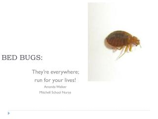 BED BUGS: