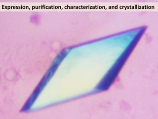 Expression, purification, characterization, and crystallization