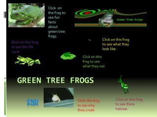 Green Tree Frogs  end