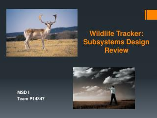 Wildlife Tracker: Subsystems Design Review