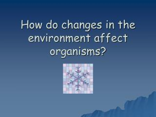 how do changes in the environment affect organisms