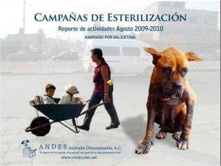 reporte de actividades 2010