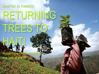 C HAPTER  13   FORESTS RETURNING TREES TO HAITI Repairing a forest ecosystem  one tree at a time