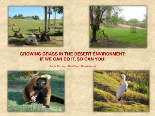GROWING GRASS IN THE DESERT ENVIRONMENT: IF WE CAN DO IT, SO CAN YOU! Robin Fischer, Hilda Tresz, David Arnold