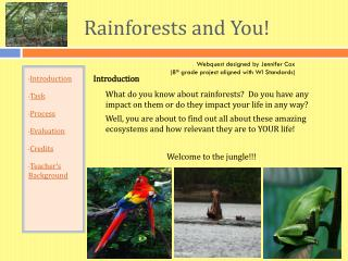 Rainforests and You!