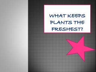 What keeps plants the  freshest ?