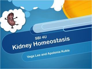 Kidney Homeostasis