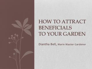 How to Attract beneficials  to your garden