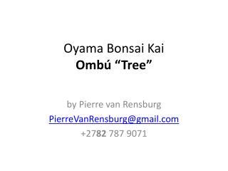 "Oyama  Bonsai Kai Ombú ""Tree"""