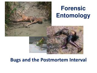 Bugs  and the Postmortem Interval
