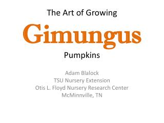 The Art of Growing  Gimungus  Pumpkins