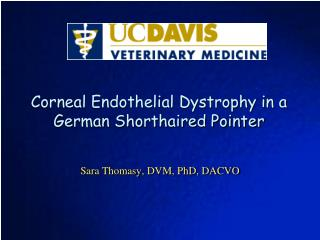 Corneal Endothelial Dystrophy in a German Shorthaired Pointer