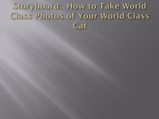 Storyboard:  How to Take World Class Photos of Your World-Class Cat