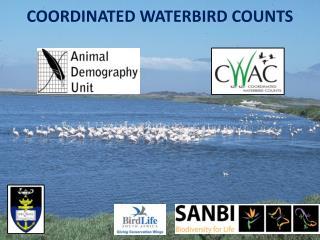 COORDINATED WATERBIRD COUNTS