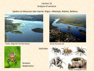 Spiders  on  Mazurian lake islands : Wigry –Mikołajki, Nidzkie,  Bełdany