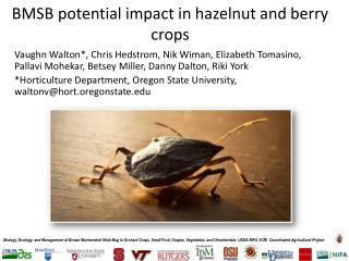 BMSB potential impact in hazelnut and berry crops