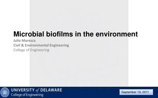 Microbial biofilms in the environment Julie Maresca Civil & Environmental Engineering College of Engineering