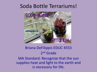 Soda Bottle Terrariums!