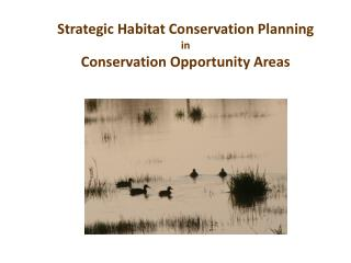 Strategic Habitat Conservation Planning  in  Conservation Opportunity Areas