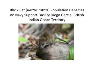 Black Rat ( Rattus rattus ) Population Densities on Navy Support Facility Diego Garcia, British Indian Ocean Territory