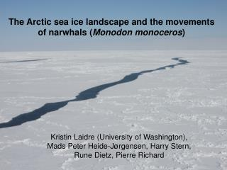 The Arctic sea ice landscape and the movements of narwhals ( Monodon monoceros )
