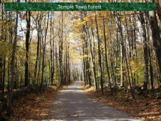 Temple Town Forest