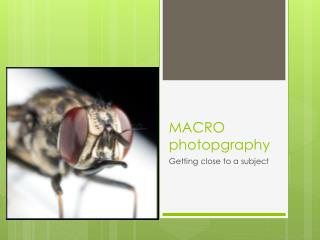 MACRO  photopgraphy