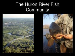 The Huron River Fish Community