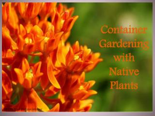 Container Gardening with Native Plants