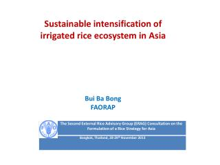 Sustainable intensification of irrigated rice ecosystem in Asia Bui Ba Bong FAORAP