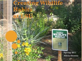 Creating Wildlife Habits  at LSU