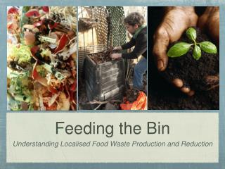 Feeding the Bin