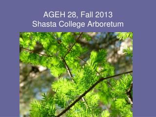 AGEH  28,  Fall  2013 Shasta College Arboretum