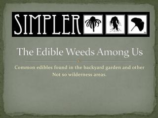The Edible Weeds Among Us