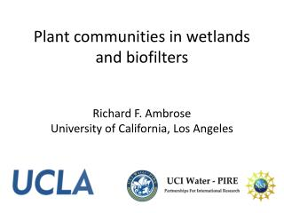 Plant communities in wetlands and  biofilters