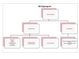 (B) Organogram