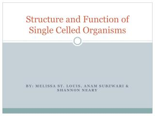Structure and Function of Single Celled Organisms