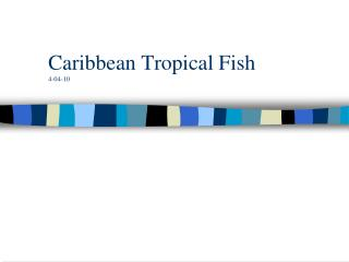 Caribbean Tropical Fish 4-04-10
