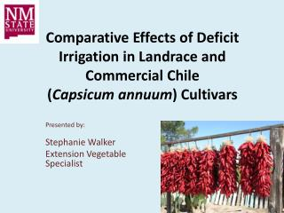 Comparative Effects of Deficit Irrigation in Landrace and Commercial Chile  ( Capsicum  annuum ) Cultivars