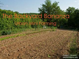 The  Backyard Bonanza Urban Mini Farming