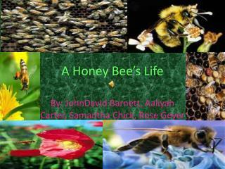 A Honey Bee's Life