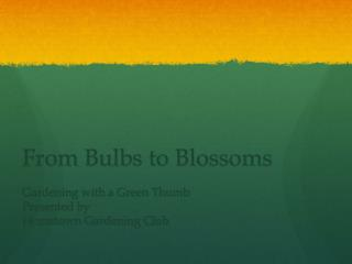 From Bulbs to Blossoms