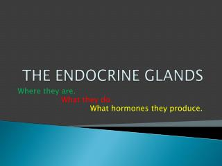 THE ENDOCRINE GLANDS