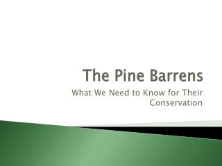 The Pine Barrens