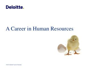 A Career in Human Resources