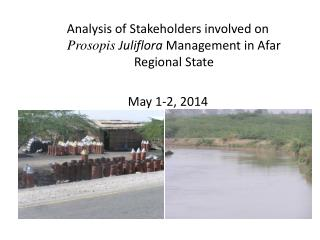 Analysis of Stakeholders involved on  Prosopis Juliflora Management in Afar Regional State May 1-2, 2014