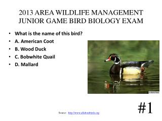 2013 AREA WILDLIFE MANAGEMENT JUNIOR GAME BIRD BIOLOGY EXAM