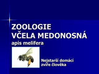 zoologie vcela medonosn  apis melifera