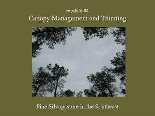 module #4 Canopy Management and Thinning